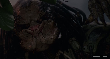 Predator - Not That Dumb