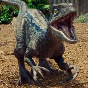 Owen Establishes Dominance within the Raptor Pack in this New Jurassic World Movie Clip!