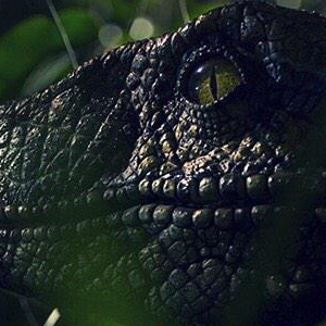 Colin Trevorrow teases tomorrow's Jurassic World trailer with a new Velociraptor pic!