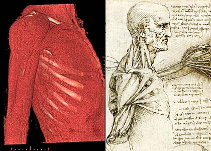 The Plastinated Synthetic