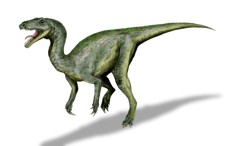 Top 10 Favorite basal dinosaur