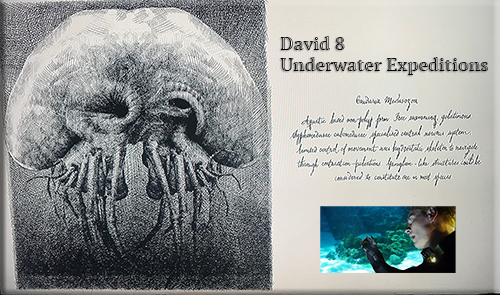 Underwater Expeditions on Paradise