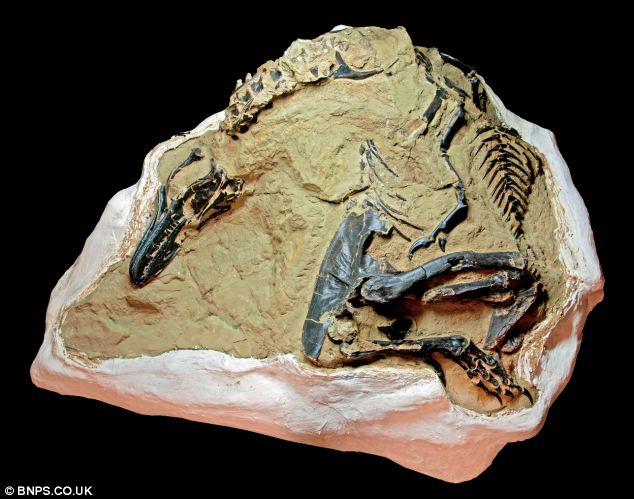 Possible Baby T.rex Discovered in Montana!