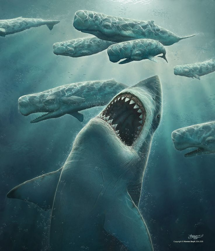 What animal can kill Megalodon?