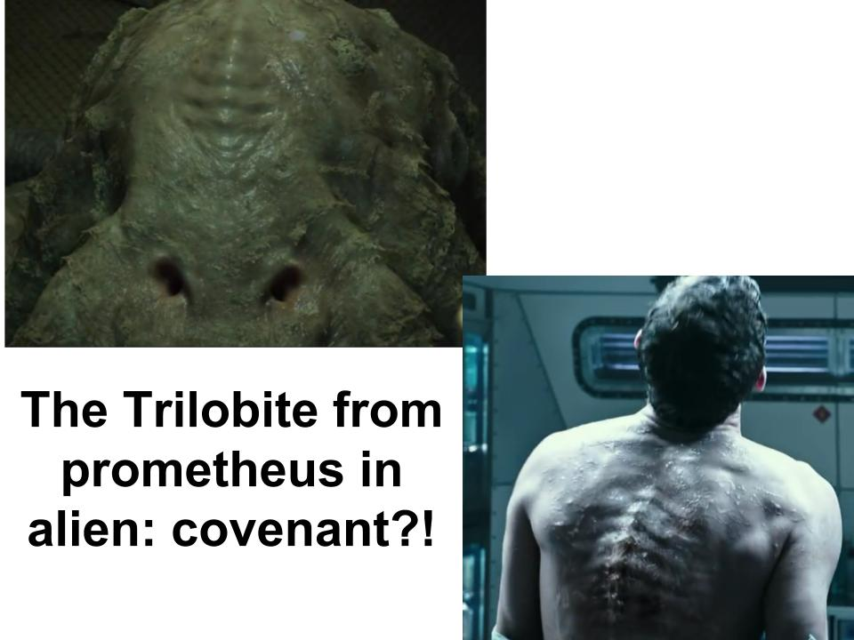Do you think that the Trilobite from Prometheus will be in Alien: Covenant?
